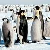Игра Пазл: Маленький пингвин