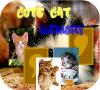 Игра Парные картинки: Котята