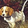Игра Пазл: пес в лесу