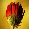 Игра Пазл: Дикий цветок