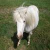 Игра Пазл: Пони