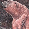 Игра Пазл: Полярные медведи