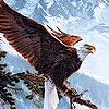 Игра Пазл: Хищная птица
