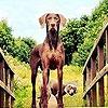 Игра Пазл: Собака