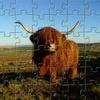 Игра Пазл: Высокогорная корова
