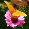 Игра Пазл: Оранжевая бабочка
