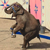 Игра Пазл: Цирковой слон
