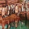 Игра Пятнашки: Пингвины