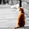 Игра Пазл: Котик
