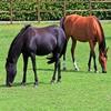 Игра Пазл: Две лошадки