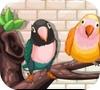 Игра Домашние попугаи