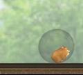 Игра Хомяк в пузыре