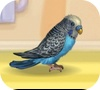 Game My little parrot