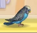 Игра Мой маленький попугай