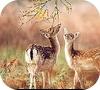 Игра Передвижной пазл: Два олененка