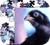 Игра Птичка Джигсау