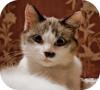 Игра Пазл: Кот