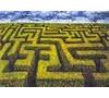 Game Big Maze