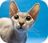 Game Cat Puzzle Game