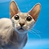 Игра Пазл: Кошка