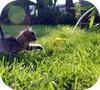 Игра РеПиксел: найди кота