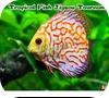 Кадр из игры Пазл: Тропические рыбки
